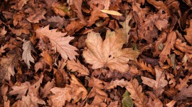 Dry Leaves Photo Free