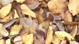 Dry Leaves Photo Free#2