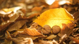 Dry Leaves Wallpaper Download