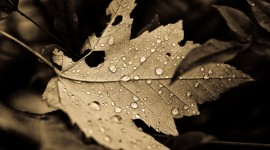 Dry Leaves Wallpaper Free