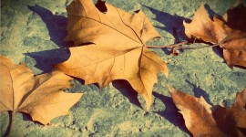 Dry Leaves Wallpaper Full HD