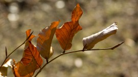Dry Leaves Wallpaper Gallery