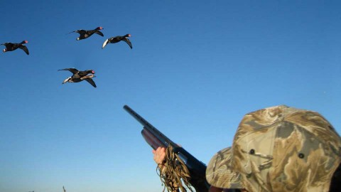 Duck Hunting wallpapers high quality
