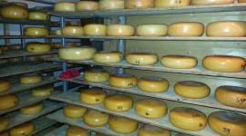 Dutch Cheese Wallpaper HD