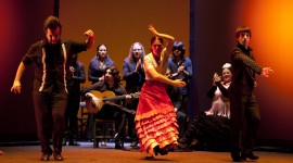 Flamenco Wallpaper Download