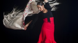Flamenco Wallpaper For IPhone