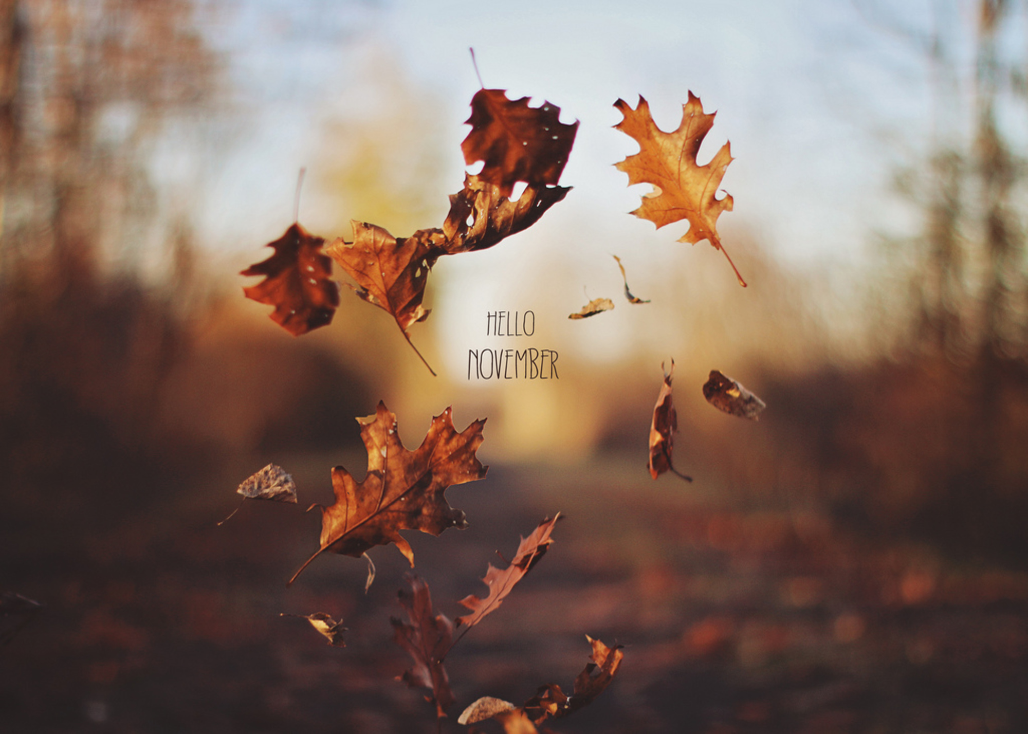 Hello Autumn Wallpapers High Quality Download Free