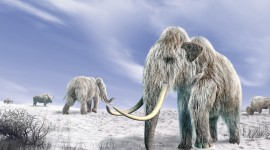 Mammoth Desktop Wallpaper HD