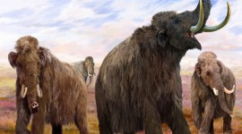 Mammoth Wallpaper Download Free