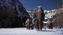 Mammoth Wallpaper Gallery