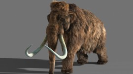 Mammoth Wallpaper HD
