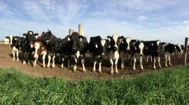 Milk Farm Best Wallpaper