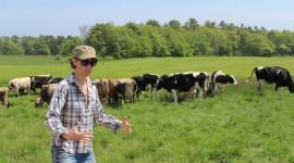 Milk Farm High Quality Wallpaper