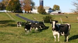 Milk Farm Wallpaper Free