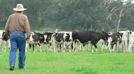 Milk Farm Wallpaper HD