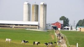 Milk Farm Wallpaper HQ