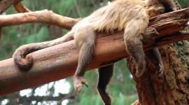 Monkeys Sleeping Photo