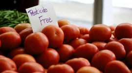 Organic Food Wallpaper Gallery