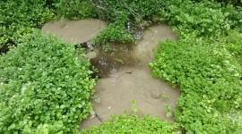 Spring Water Wallpaper