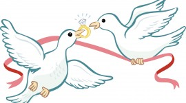 Wedding Pigeons Aircraft Picture