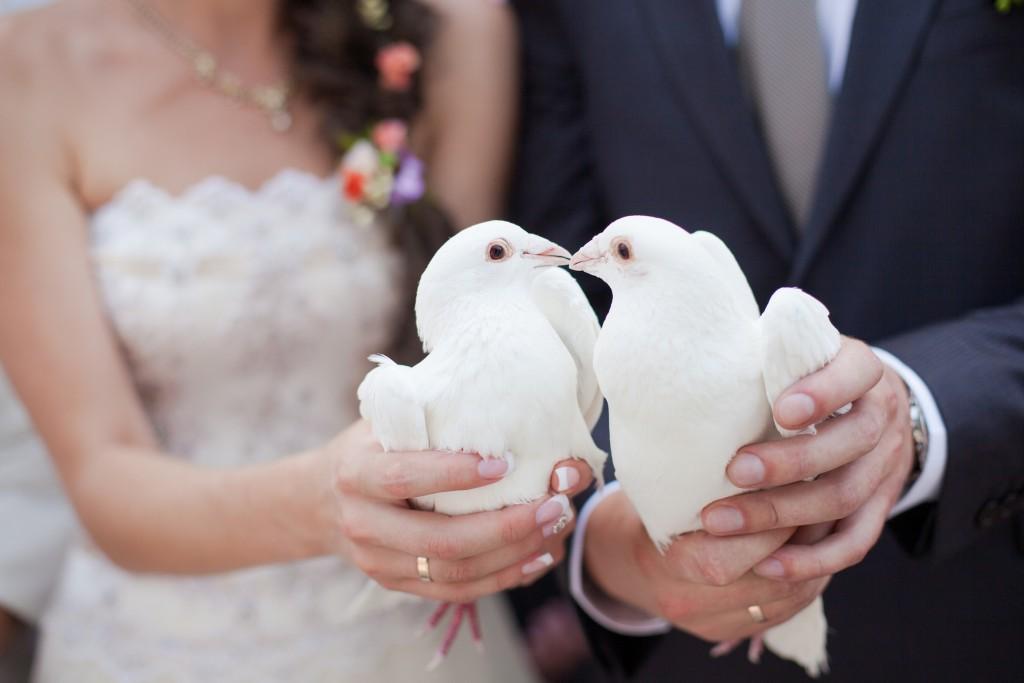 Wedding Pigeons wallpapers HD