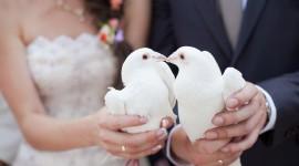 Wedding Pigeons Best Wallpaper