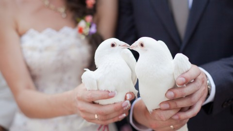 Wedding Pigeons wallpapers high quality