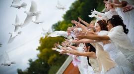 Wedding Pigeons Desktop Wallpaper