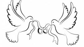 Wedding Pigeons Image Download