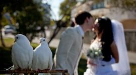 Wedding Pigeons Photo