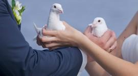Wedding Pigeons Photo Free