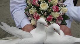 Wedding Pigeons Photo Free#1