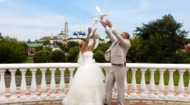 Wedding Pigeons Wallpaper Download