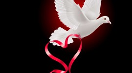Wedding Pigeons Wallpaper For Android