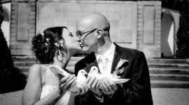 Wedding Pigeons Wallpaper For Desktop