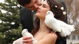 Wedding Pigeons Wallpaper HQ