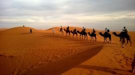 4K Camel Wallpaper