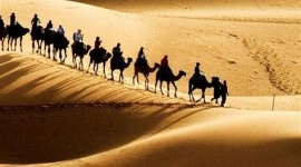 4K Camel Wallpaper For Android