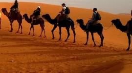 4K Camel Wallpaper For IPhone