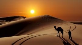 4K Camel Wallpaper For PC
