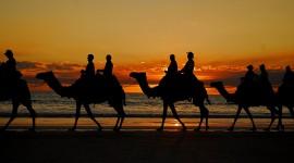4K Camel Wallpaper Free