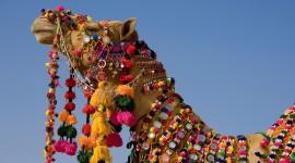 4K Camel Wallpaper Full HD
