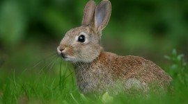 4K Hare Photo Download