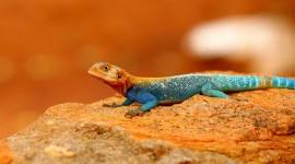 4K Monitor Lizard Photo Download