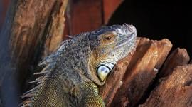 4K Monitor Lizard Photo Free#1
