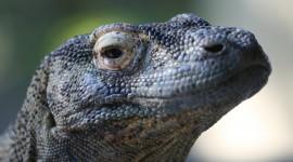 4K Monitor Lizard Photo#1