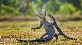 4K Monitor Lizard Photo#2