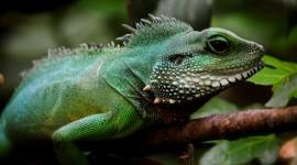 4K Monitor Lizard Wallpaper