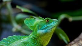 4K Monitor Lizard Wallpaper Free