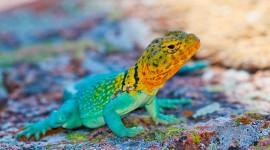 4K Monitor Lizard Wallpaper Gallery
